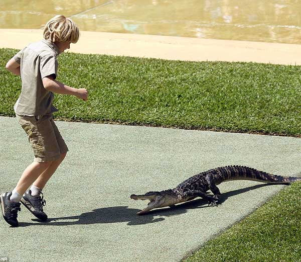 10-years-old-boy-faces-off-against-giant-crocodile