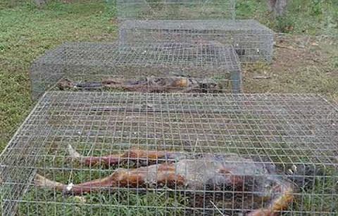 dead body farm