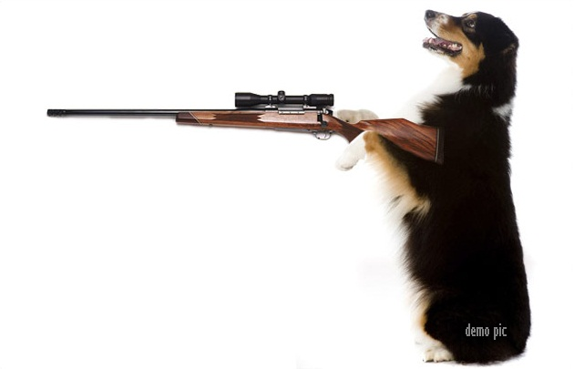 dog-carrying-gun