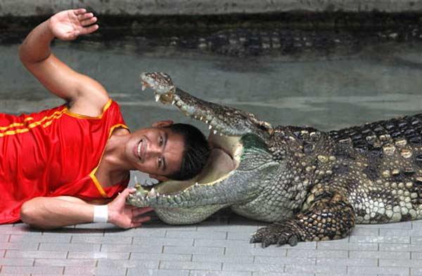 head-in-crocodiles-mouth1