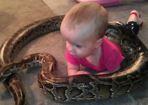 baby playing with python