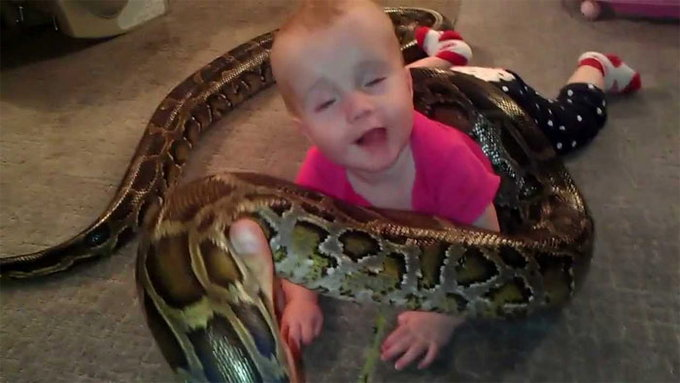baby playing with python1