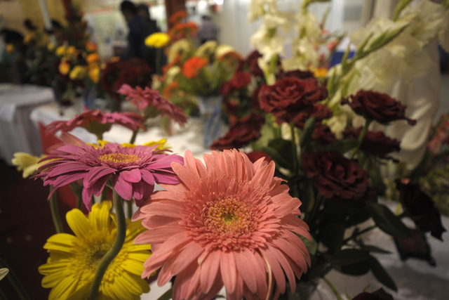 Flower Exibition  (13)