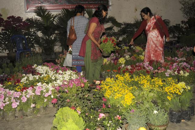 Flower Exibition  (6)