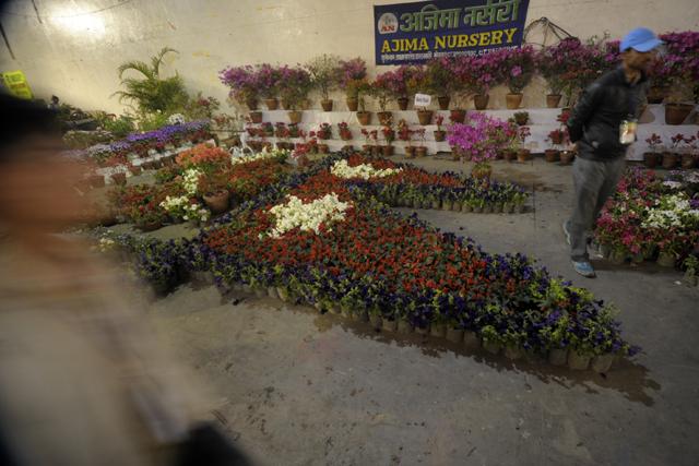 Flower Exibition  (9)