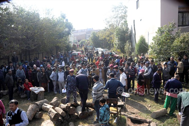 Line for timber in ktm (3)