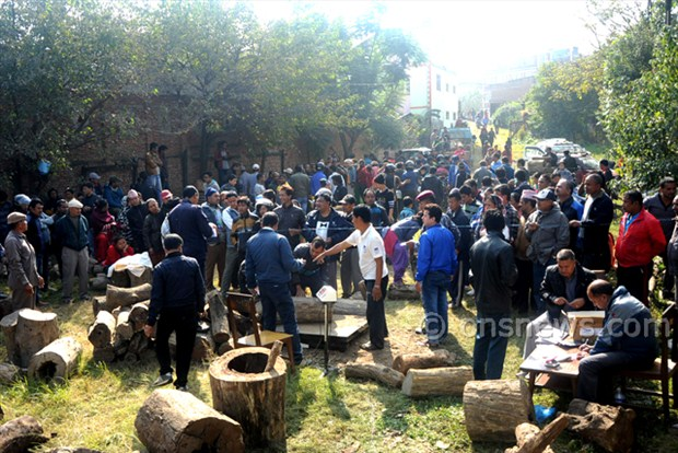 Line for timber in ktm (6)