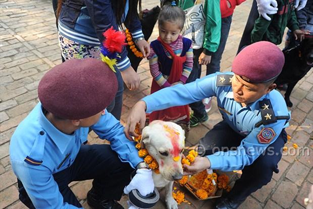 dogs' day celebration (1)