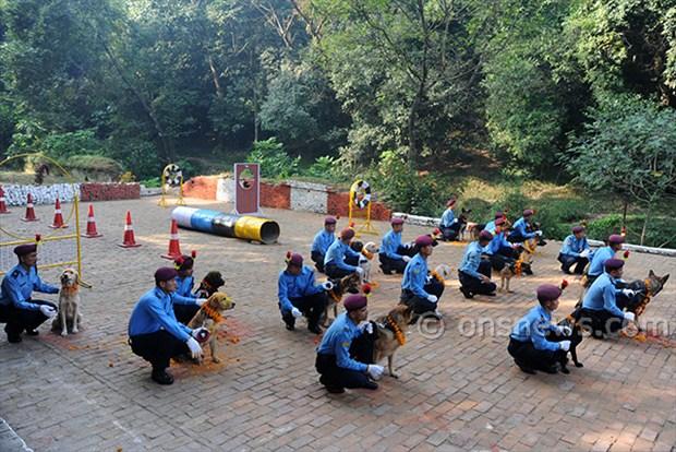dogs' day celebration (2)