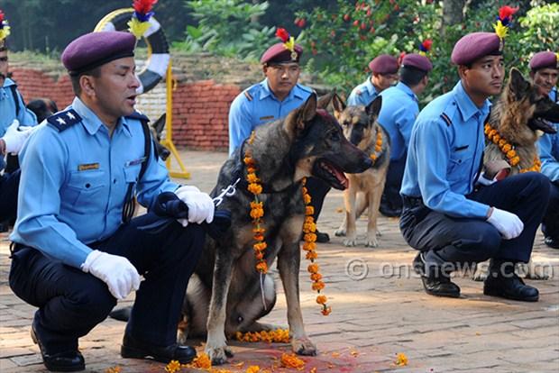 dogs' day celebration (3)