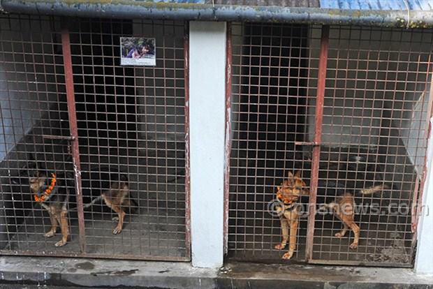 dogs' day celebration (4)