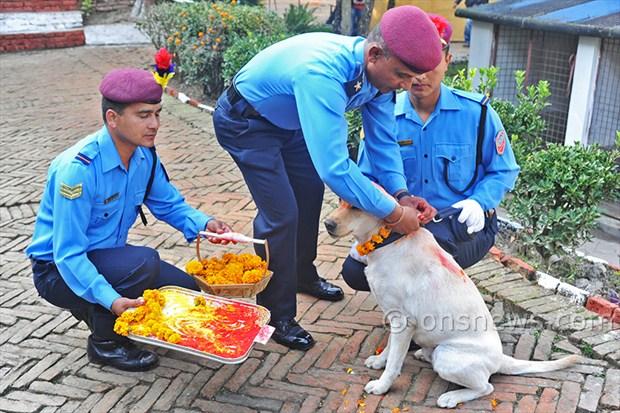dogs' day celebration (5)