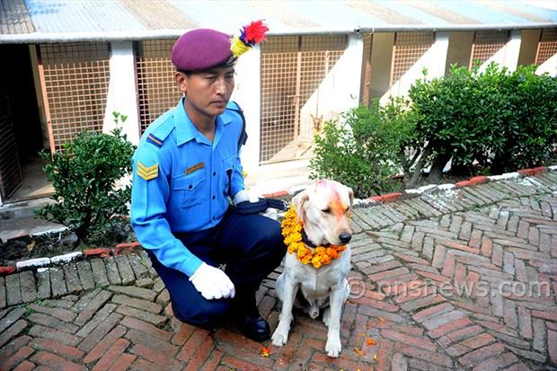 dogs' day celebration (6)