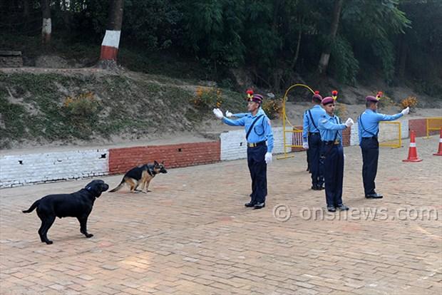 dogs' day celebration (7)